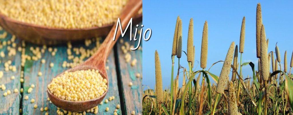 Mijo: propiedades, recetas y cómo cocinarlo