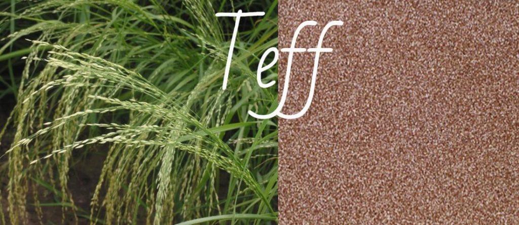 Teff: qué es, propiedades, beneficios y recetas