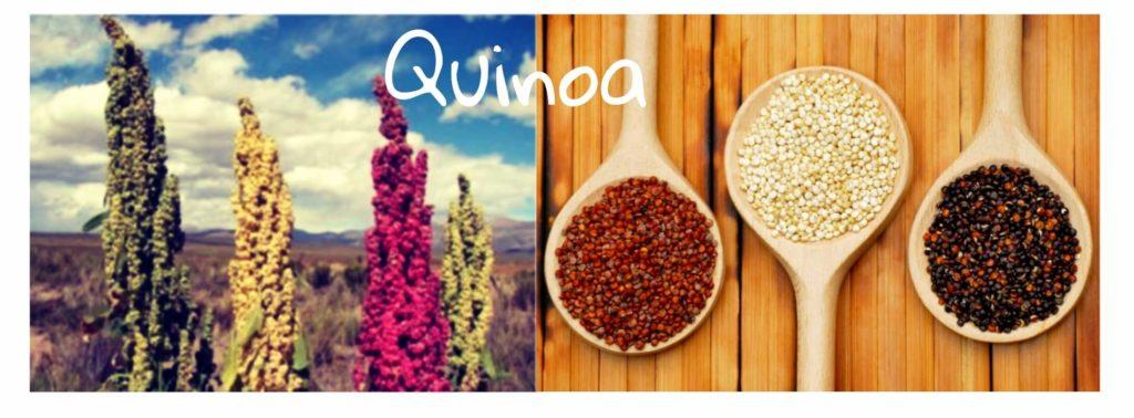 Quinoa: Propiedades, Beneficios, Contraindicaciones y Recetas